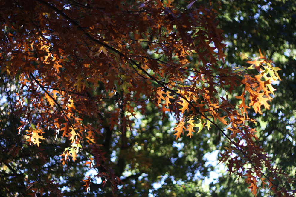 autumn_in_Hamburg_1