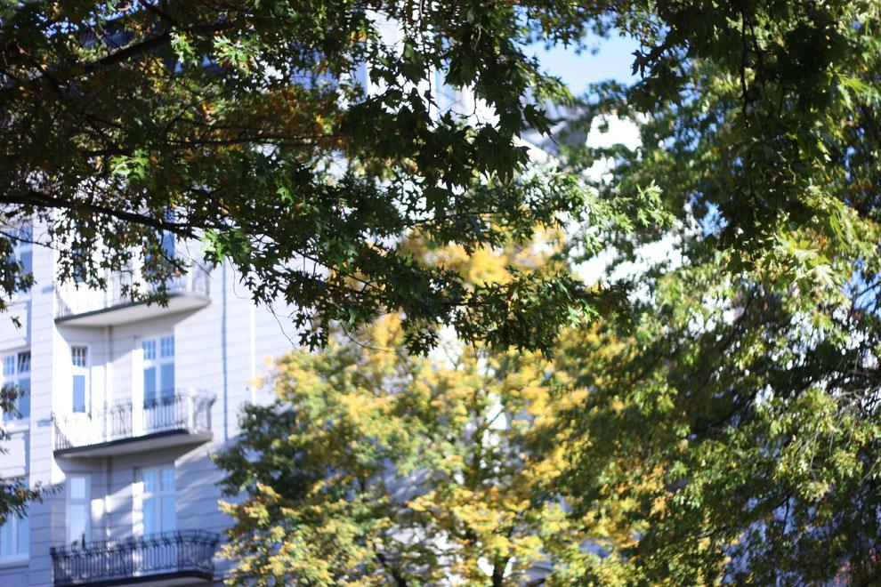 autumn_6