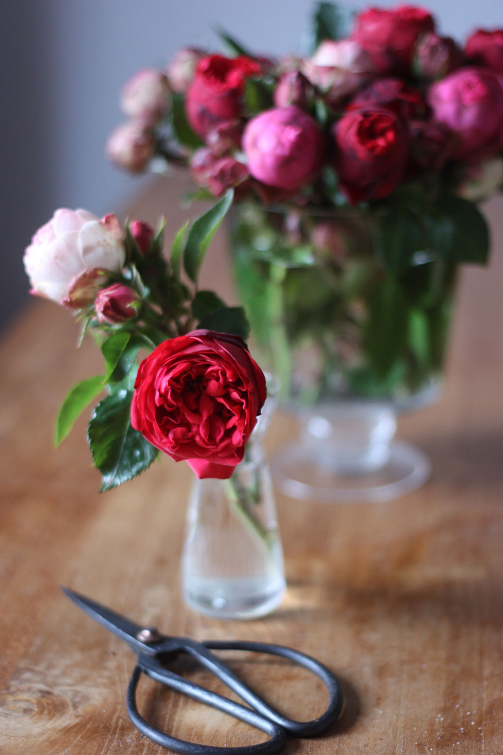 red_and_pink_roses_12