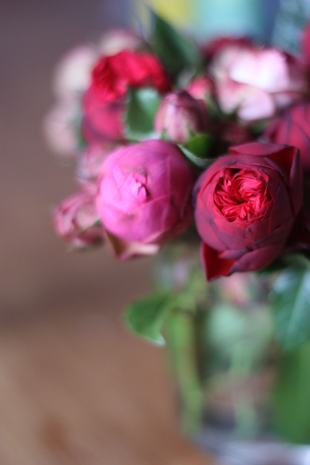 red_and_pink_roses_13