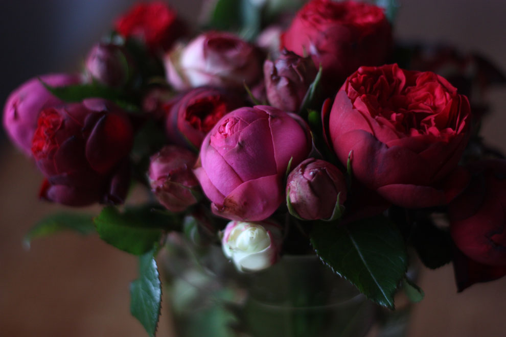 red_and_pink_roses_16