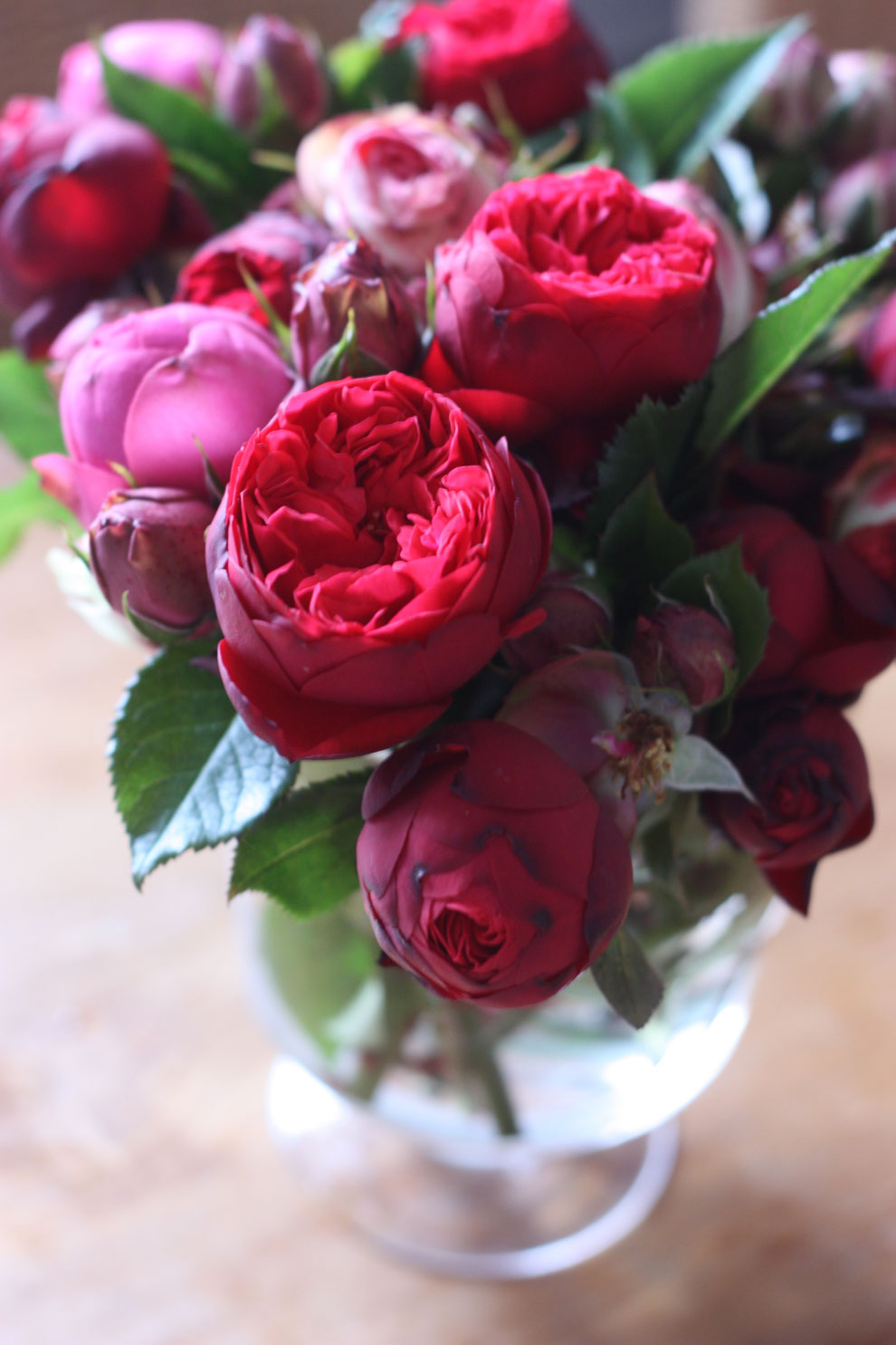 red_and_pink_roses_17