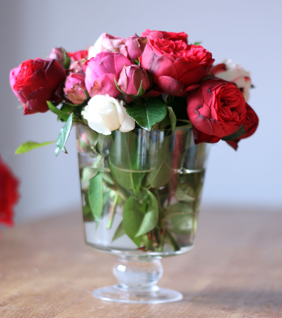 red_and_pink_roses_3