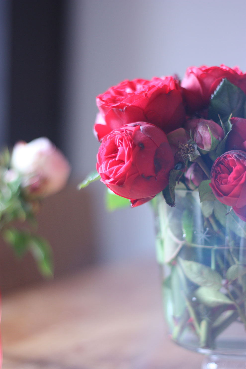 red_and_pink_roses_4