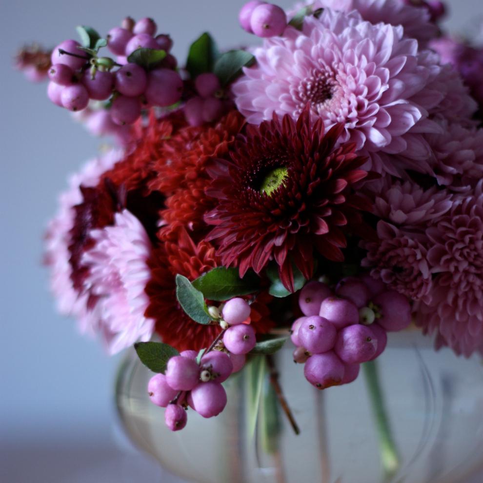2flowergirls_Chrysanthemum_madame_love_close_up