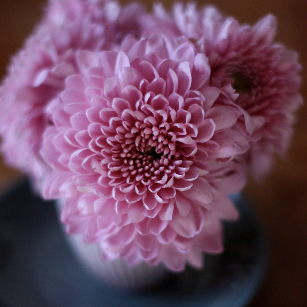 a_small_bouquet_of_pink_chrysanthemum_in_a_small_grey_vase