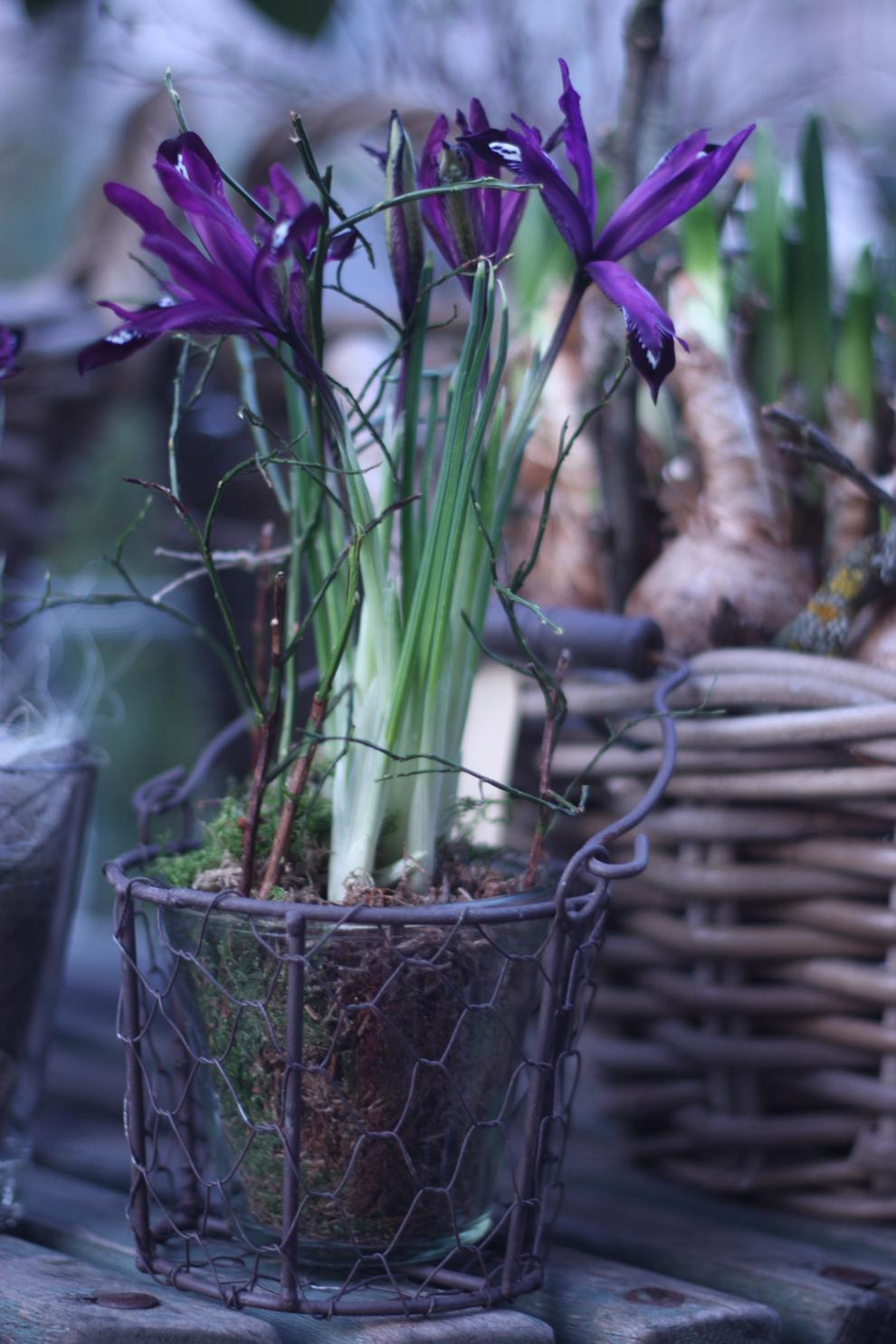Blumenküche_Iris