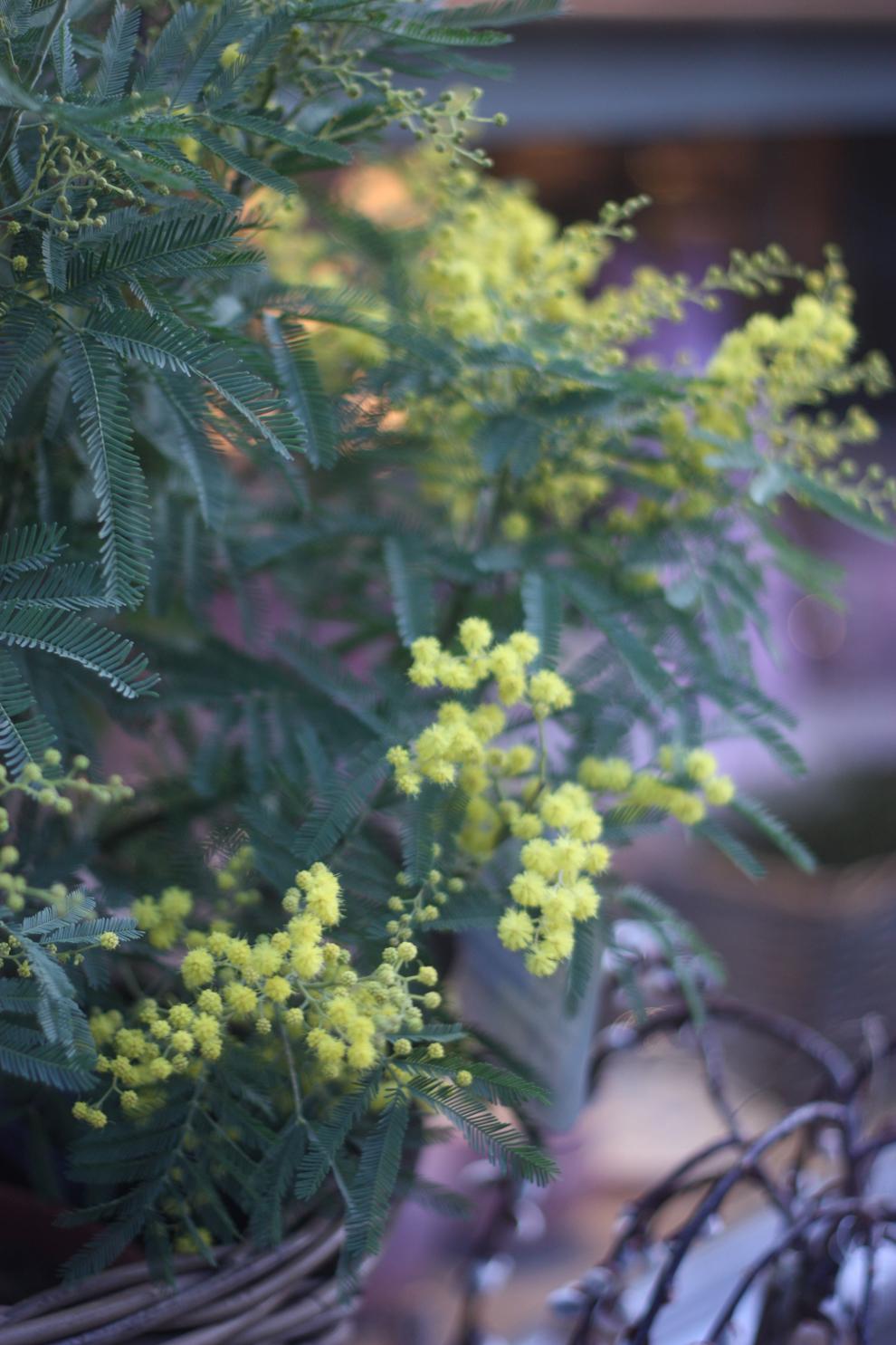 Blumenküche_minosa