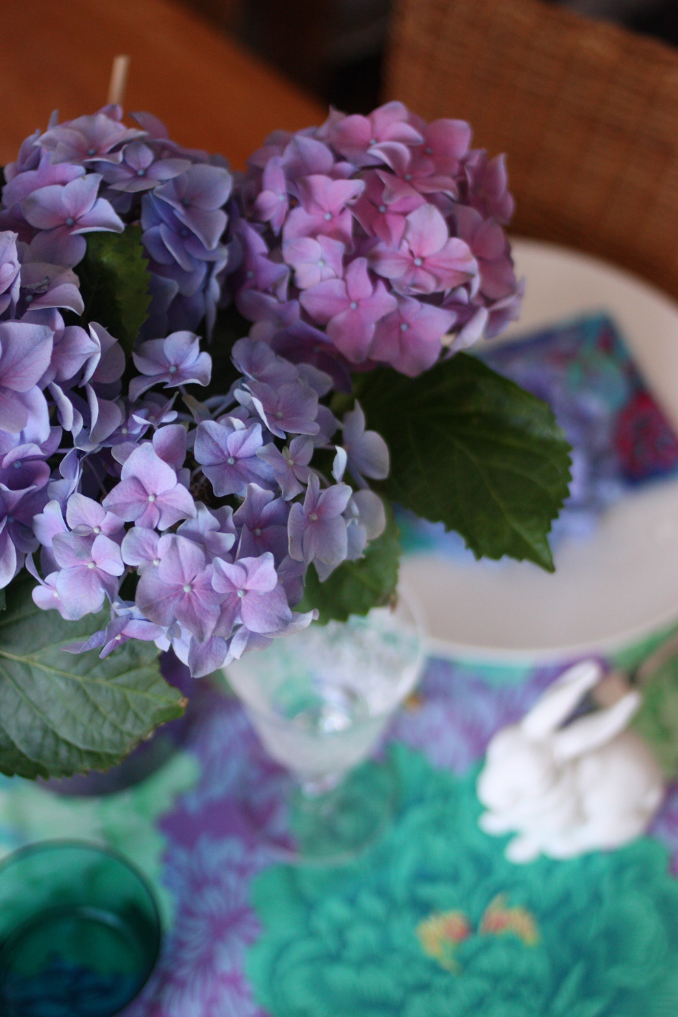 Hortensia_blue_from_above