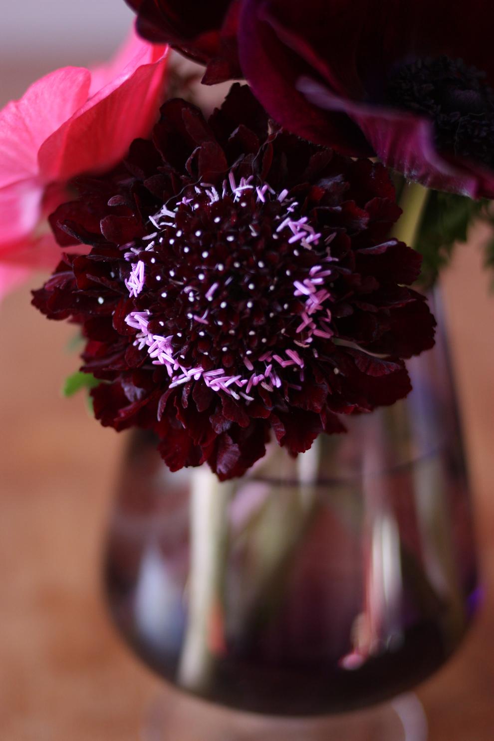 anemone_red_scabiosa