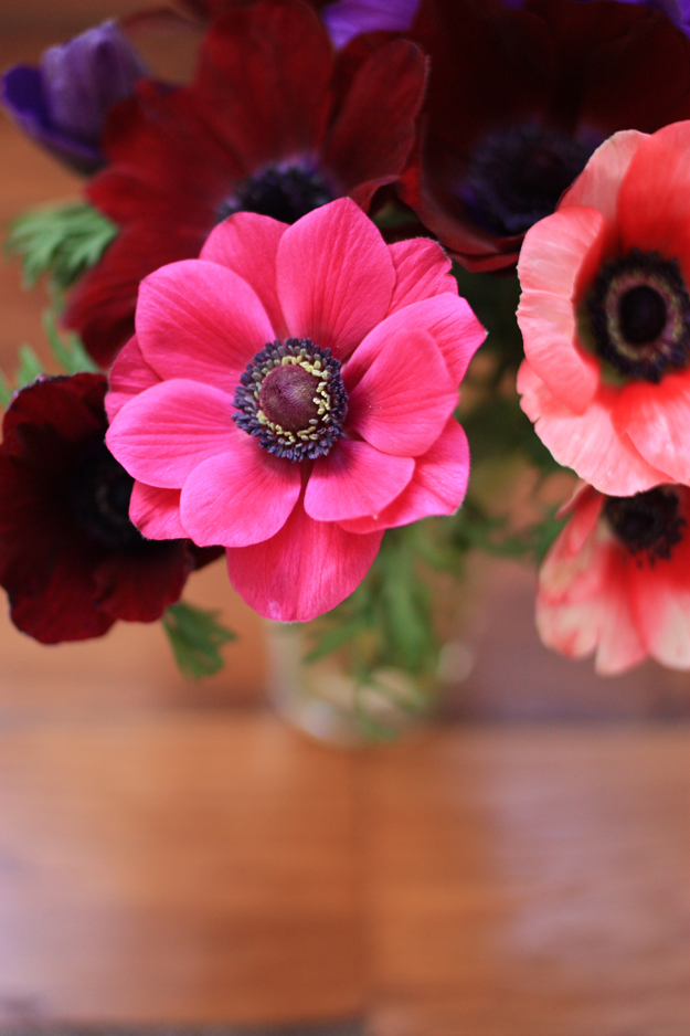 bouquet-of-anemones1.jpg