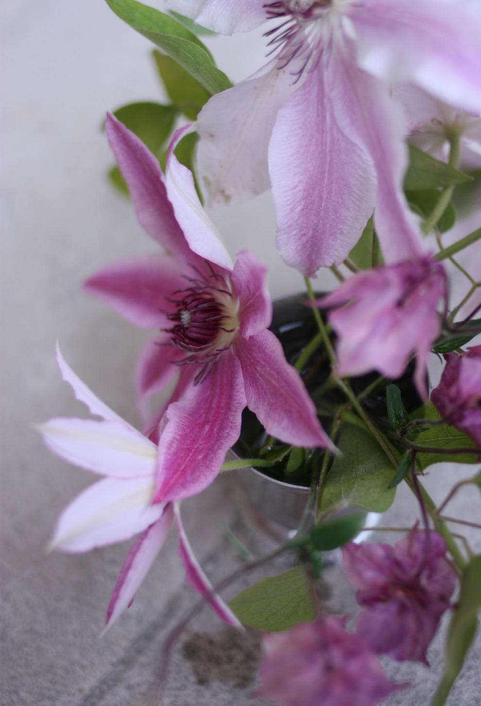 clematis_bouquet