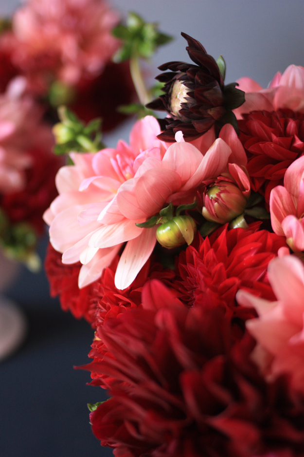 dahlia_red_pink_2