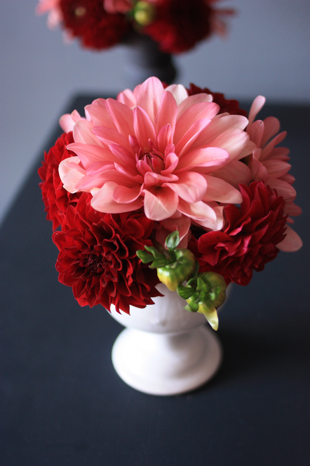 dahlia_red_pink_3
