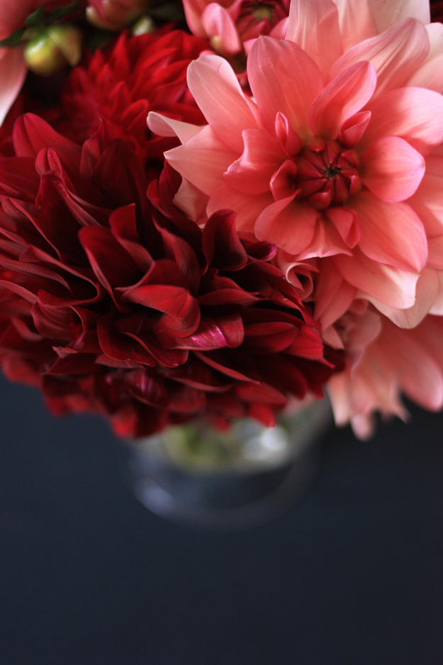 dahlia_red_pink_4