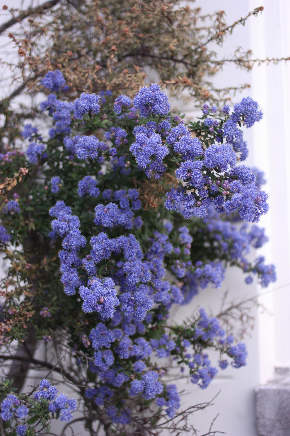 green_Amsterdam_blue_tree