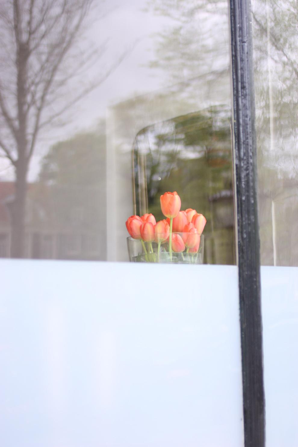 green_Amsterdam_tulips