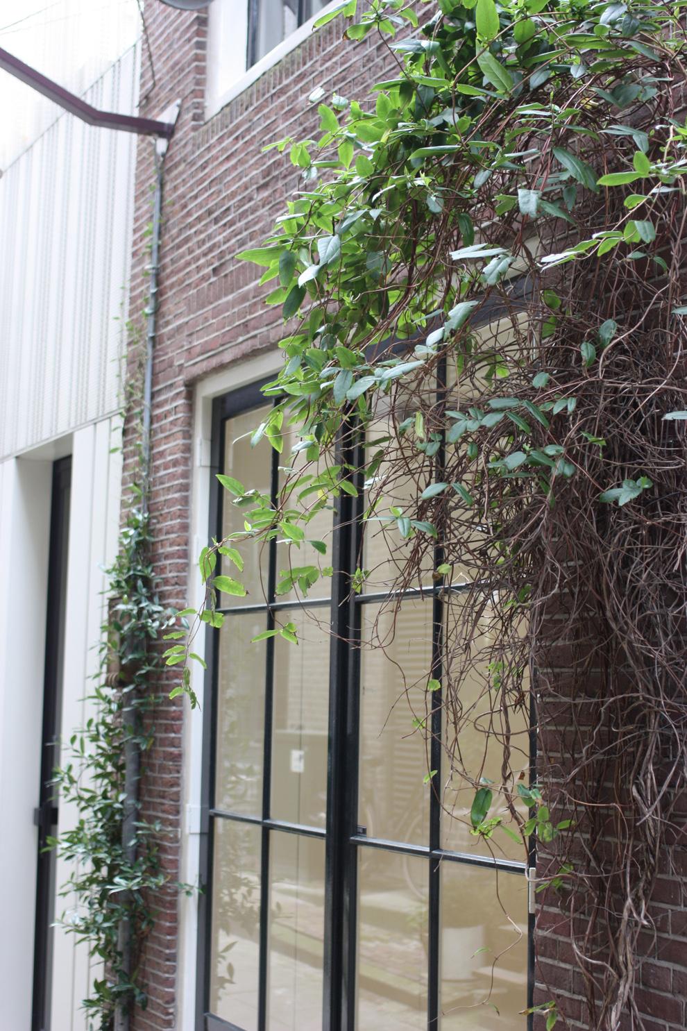 green_Amsterdam_window