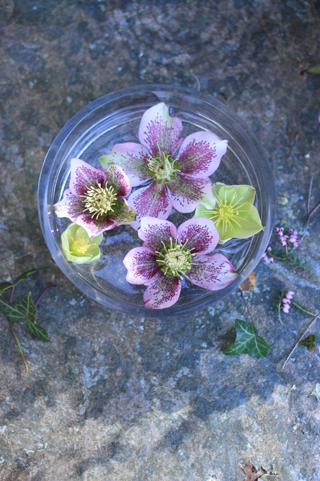 hellebores_by_madame_love
