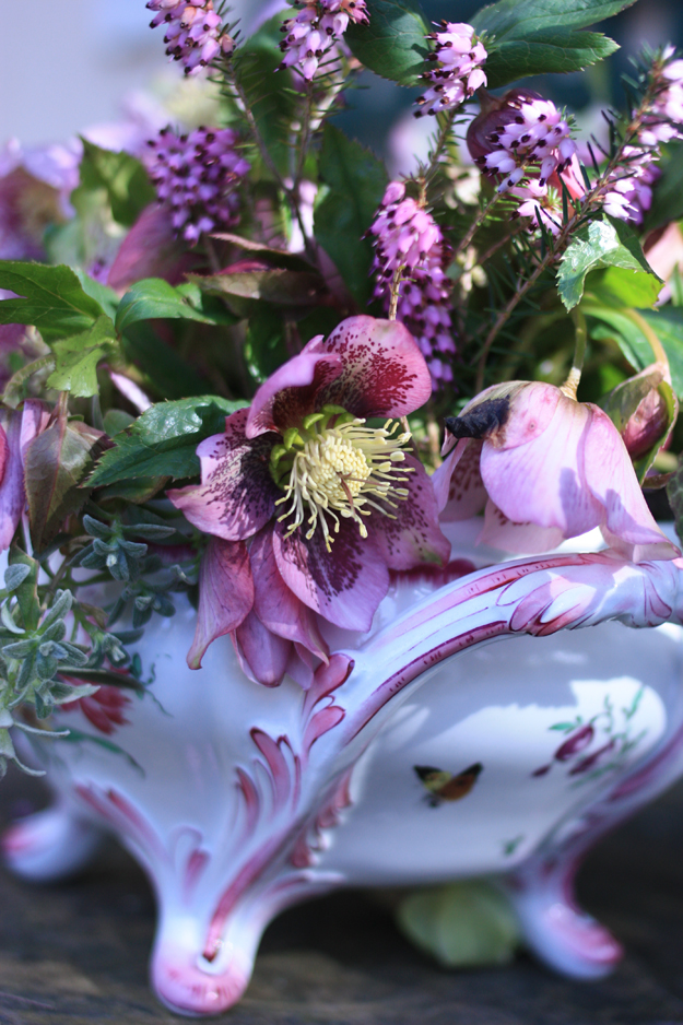 hellebores_by_madame_love_2
