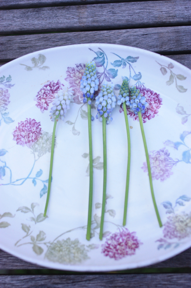 muscari in the plate