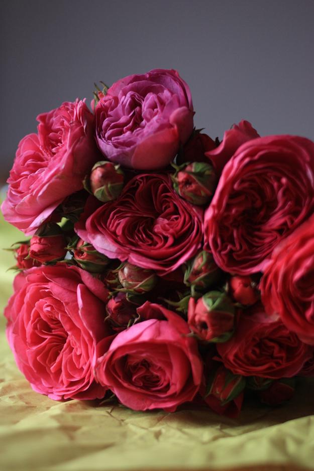 red_garden_roses_2