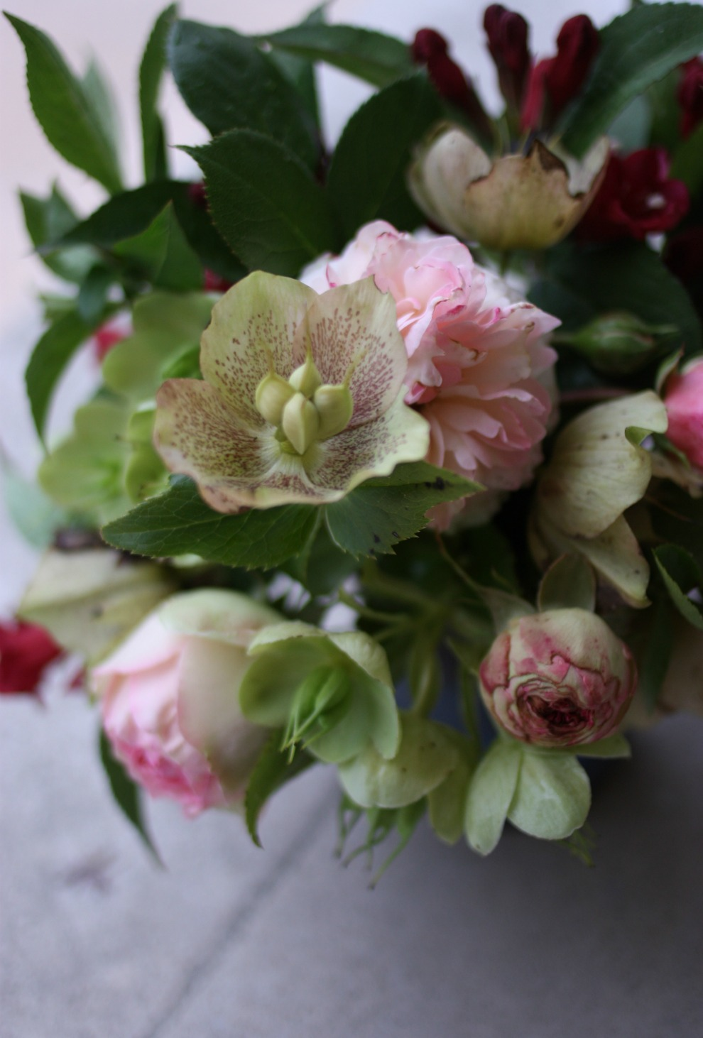 roses and hellebores from above