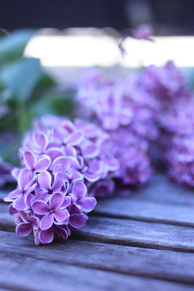 un brin de lila par madame love