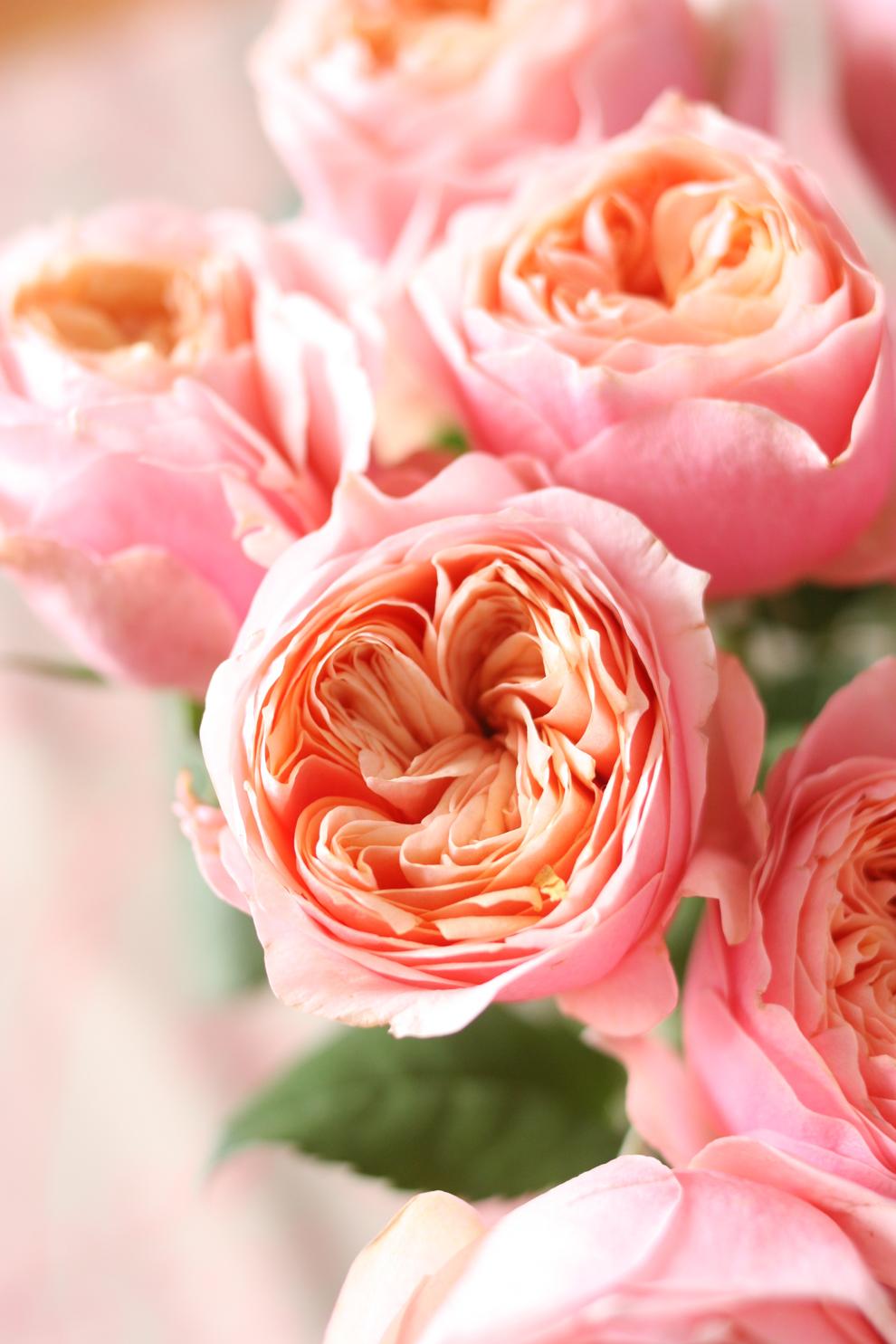 vuvuzella roses_detail