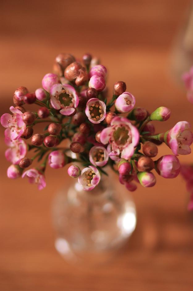 wax flower_2