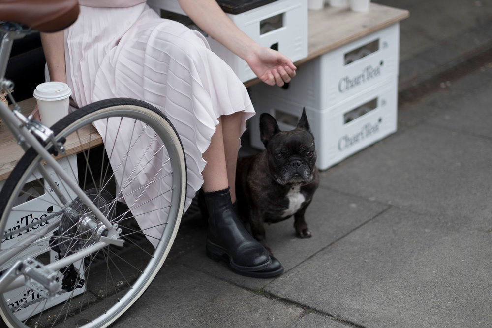 tokyobike-simple-minimal-norwich-fiona-burrage-photographer-dog.jpg