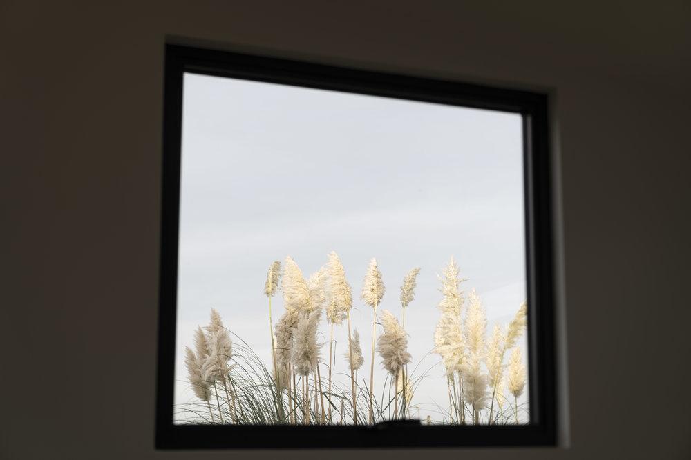 Pampas grasses through window Water Cabin.jpg