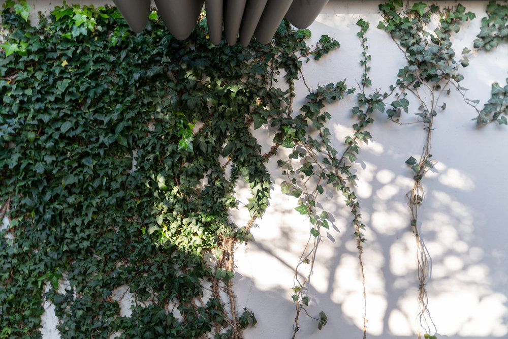 Fiona-Burrage-casa-1015-porto-norwich-photographer-ivy.jpg