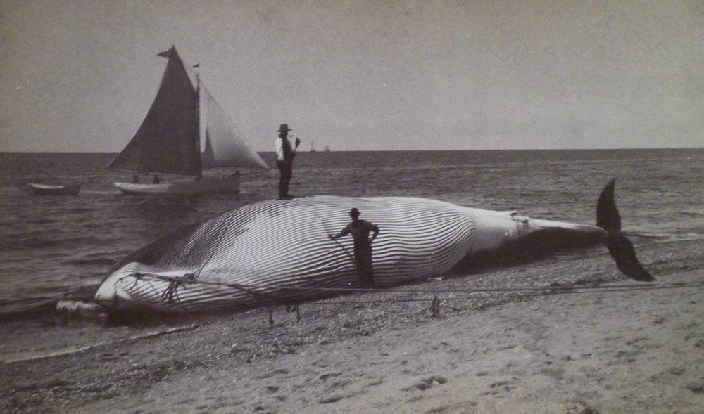 driftwhale.jpg
