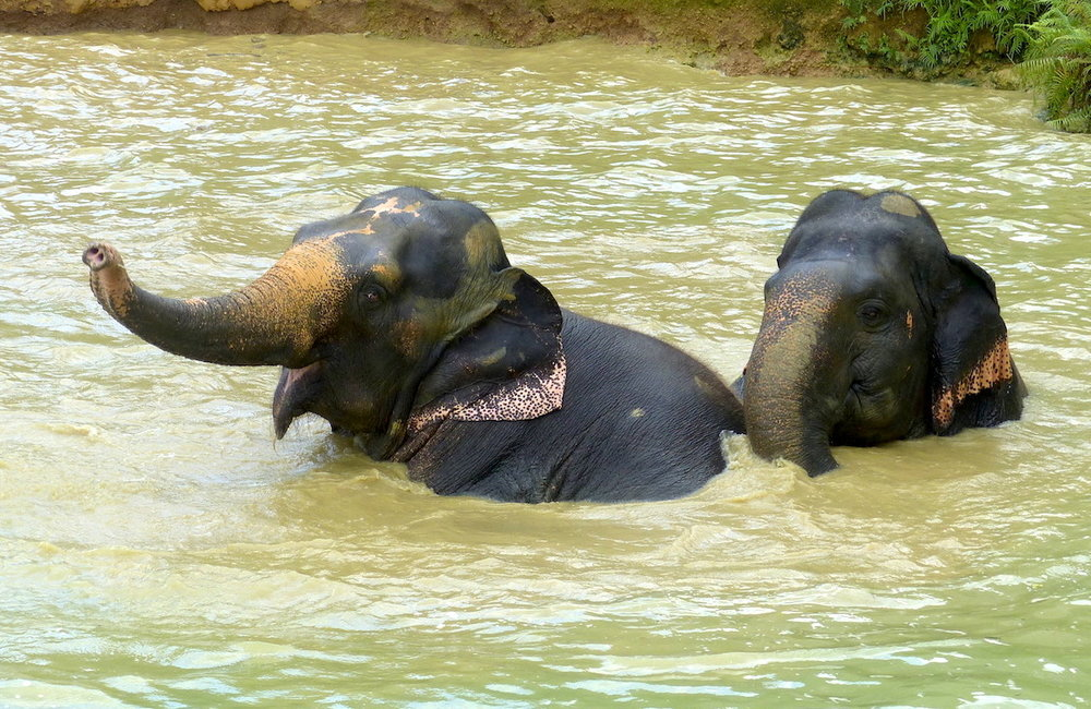 THE DAY SPA FOR ELEPHANTS -