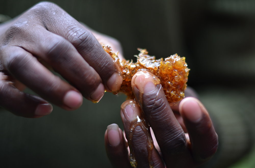 Honey hunters - stories from Kenya