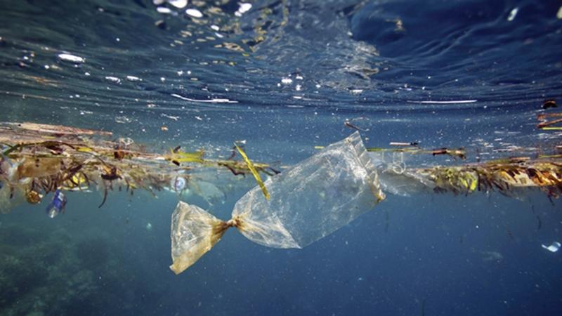 Microplastics.jpg