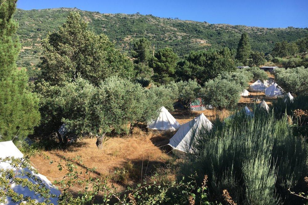 kamperen in de olijfgaard Estival Portugal.jpg