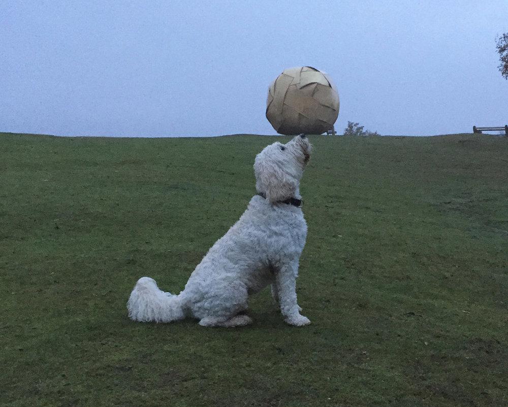 dog and boulder_sandy hills_2014_andy holden.jpg