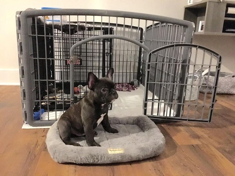 weehawken new jersey french bulldog puppy training
