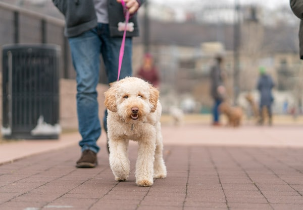 Dog Walking company in Weehawken, NJ