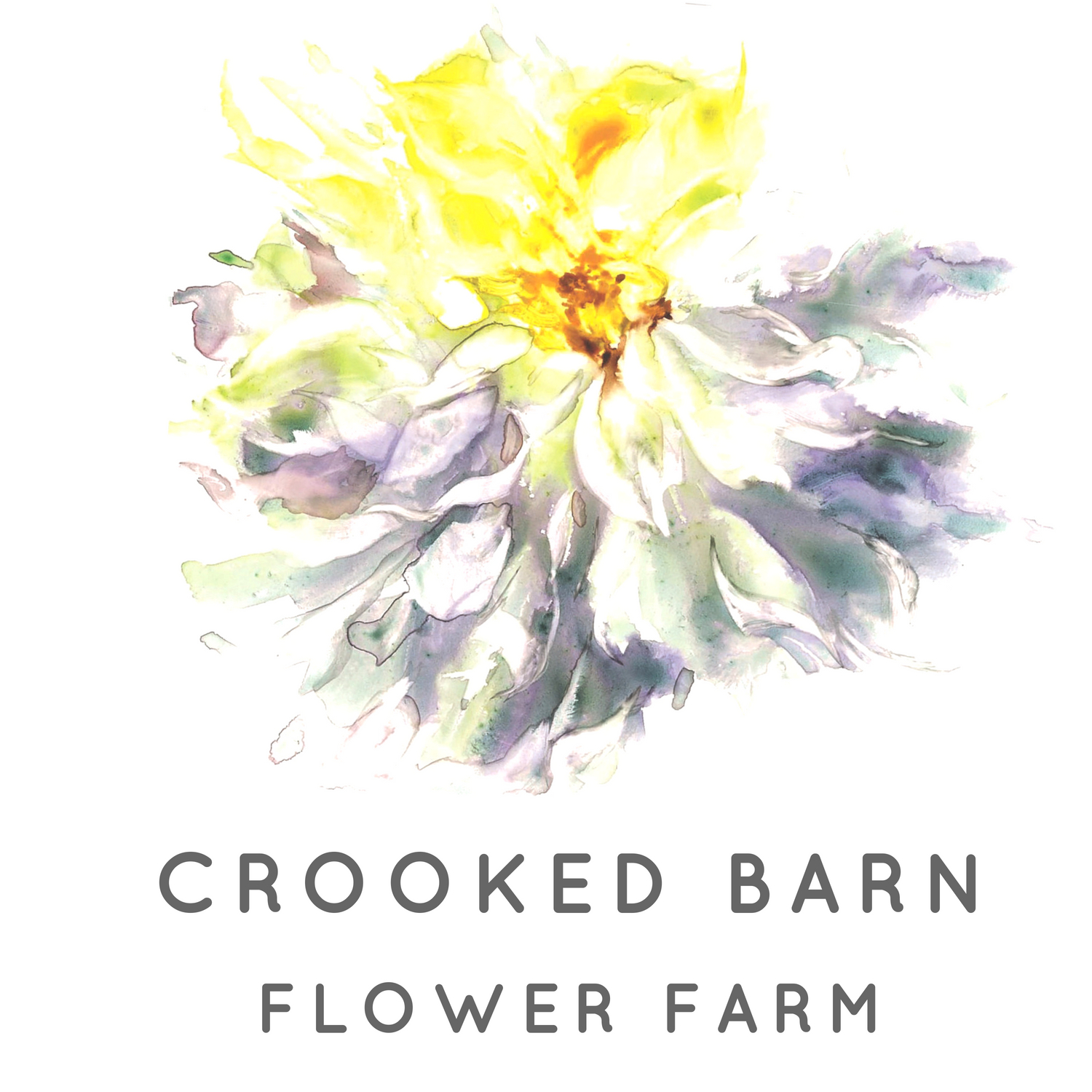 Crooked Barn Flower Farm