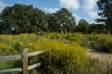 From NBG website, the meadow in bloom season