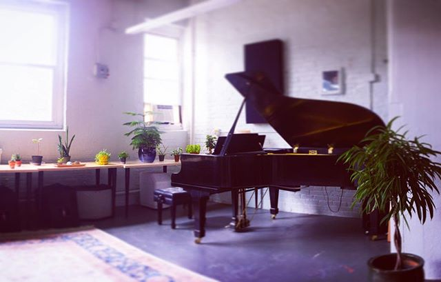 Growing 🌱🎹🌿🎹🌳 . . . #piano #pianostudio #pianogram #pianolessons #pianoteacher #music #lynn #lynnma #swampscott #nahant #salemmassachusetts #saugus #bostonnorthshore #grandpiano #houseplants #plants #growing #pianolover