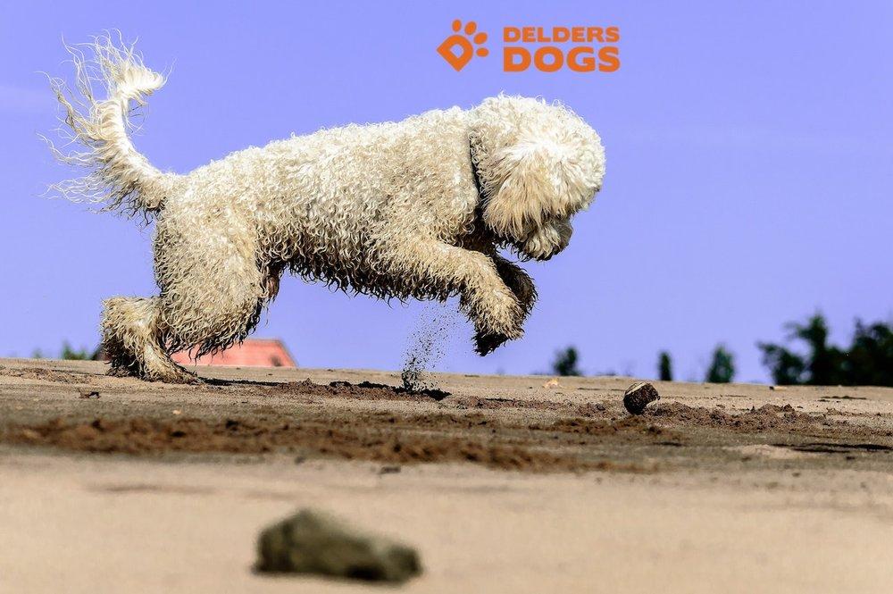 animal-ball-beach-210411.jpg