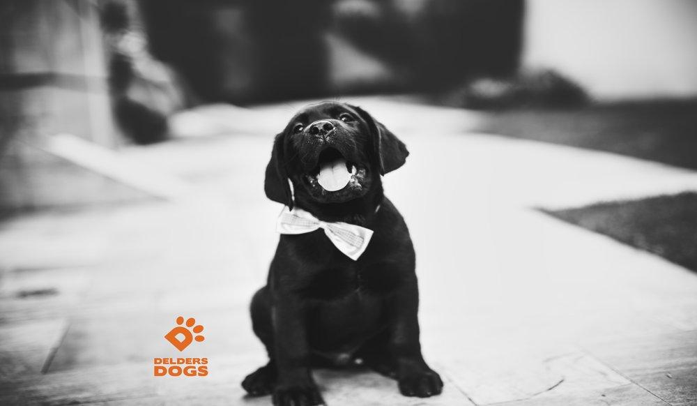 adorable-animal-photography-blur-461010.jpg