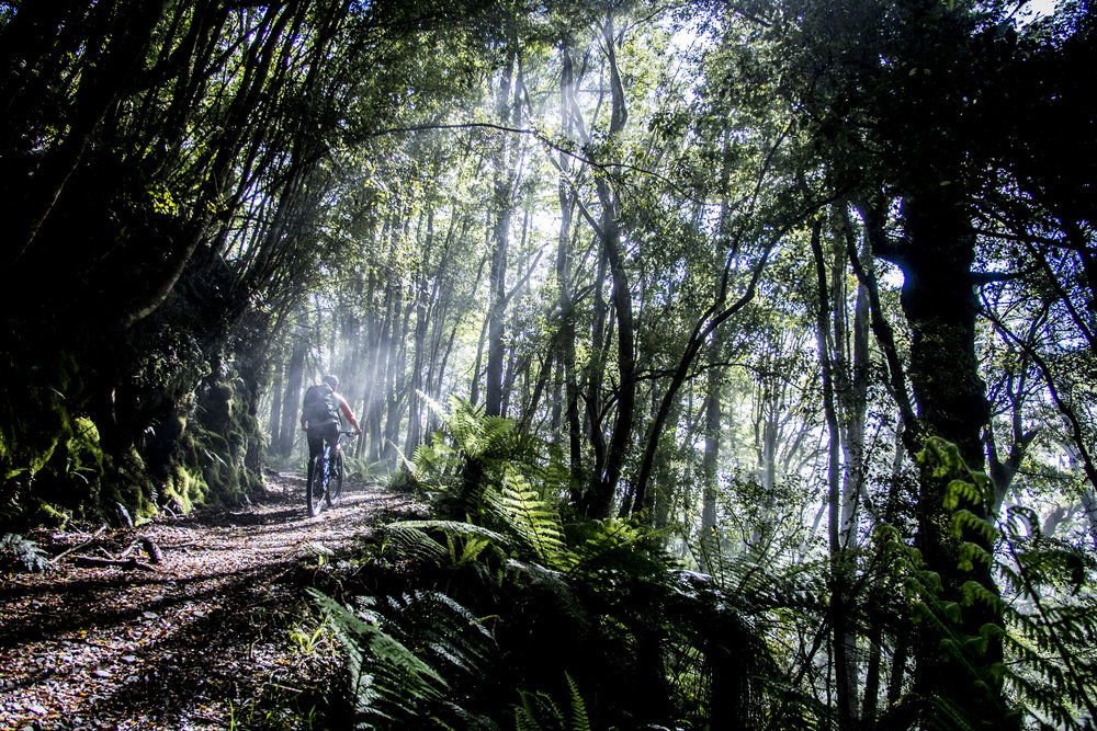 nzmtb_oldghost_forest.JPG