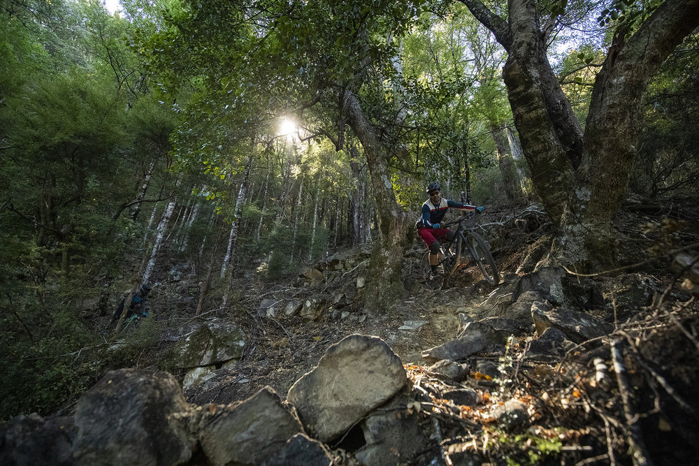 NELSON, New Zealand -  Carl Patton at the Wairoa Gorge MTB Park during the launch of the 2019 Santa Cruz Bicycles Megatower near Nelson, New Zealand. Photo by Gary Perkin