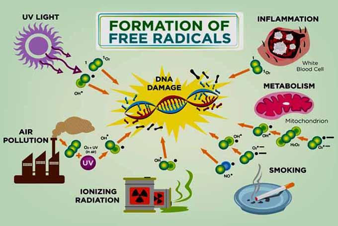 antioxidant-tips-free-radical-2.jpg