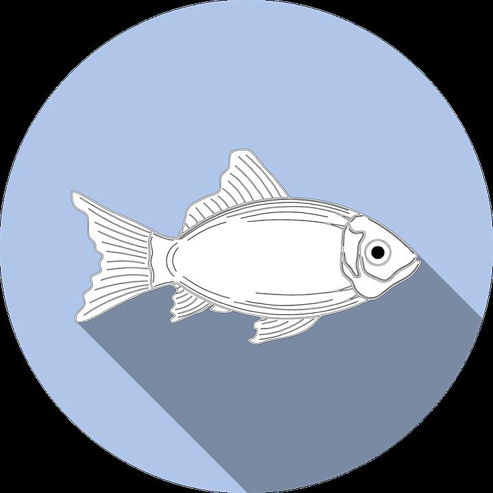 fish-1004745_960_720.png